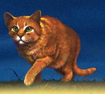 Firestar - Warrior CatsUnite or Die