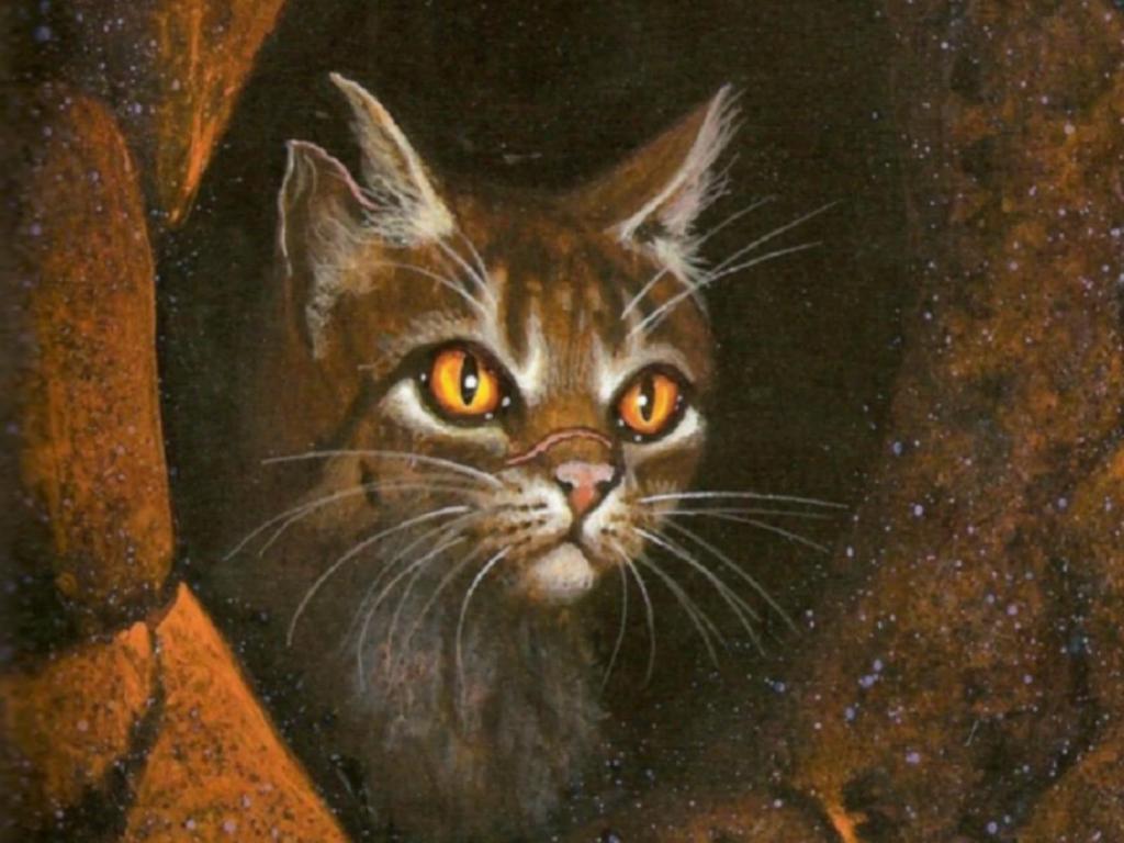 Коты воители огнезвезд фото - c3